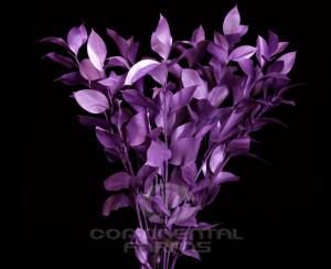 Photographs of Continental Farm's Flower varities.